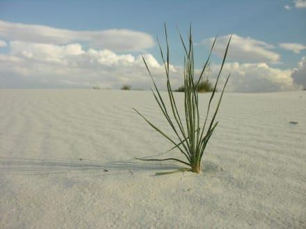 White Sands - White Sands National Monument
