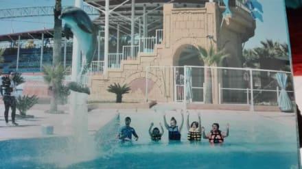 Schwimmen mit Sirius - Sealanya Delfinpark