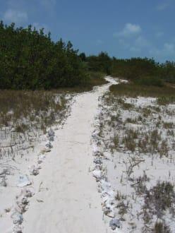 Weg auf Isla Crasqui - Los Roques
