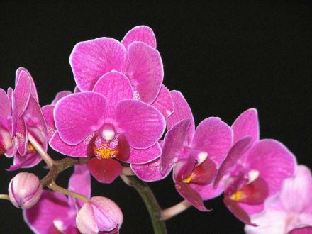 Orchidee - Orchideenhof in Luttelgeest
