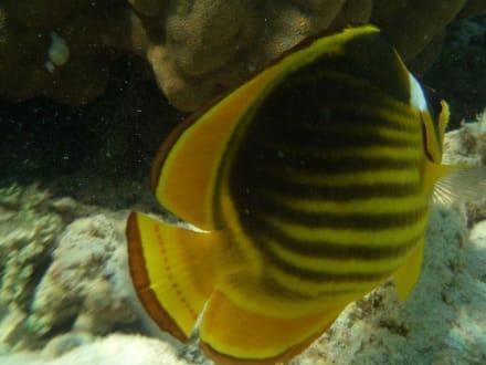 Unterwasser - Schnorcheln El Quseir