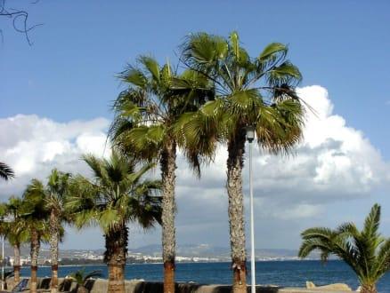 "Palmen-""Allee"" - Strandpromenade Limassol"