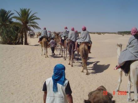 Kamel Karawane - Sahara