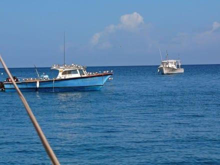 Fisch-Piraten - Fischereihafen St. Georges
