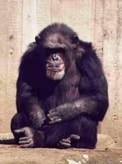 Affig - Erlebnis-Zoo Hannover