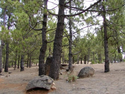 Hier gibts sogar Wälder - Bergwelt
