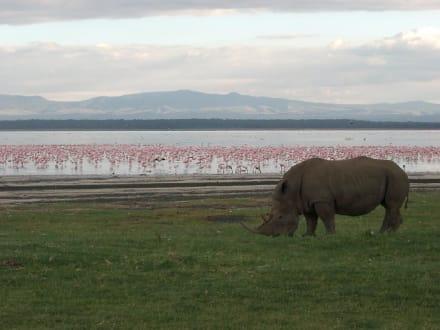 Lake Nakuru - Lake Nakuru Nationalpark