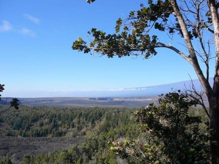 Kilauea Iki-Krater vom Crater Rim aus - Volcanoes National Park