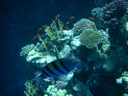 Korallengarten - Schnorcheln Coraya Bay Marsa Alam