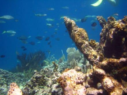 Unterwasser bei der Paradiesinsel - Paradies Insel
