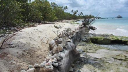 Südlich, naturbelassen - Playa Dominicus