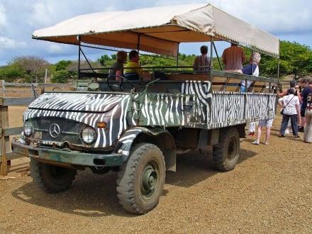 ,,Safari-Unimog' - Curacao - Safari - Tour
