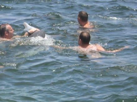 Bden mit Delfinen - Katamaran Tour Varadero
