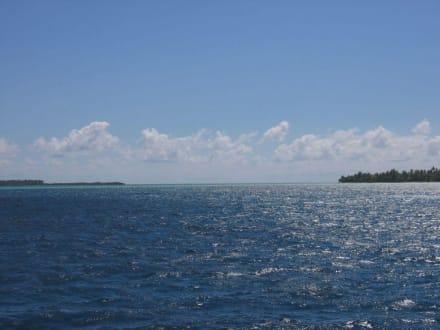 Ausflug zur Isla Saona - Isla Saona