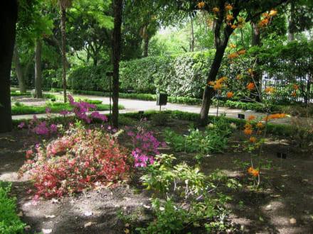 Azaleen im Schatten - Königlicher Botanischer Garten Madrid