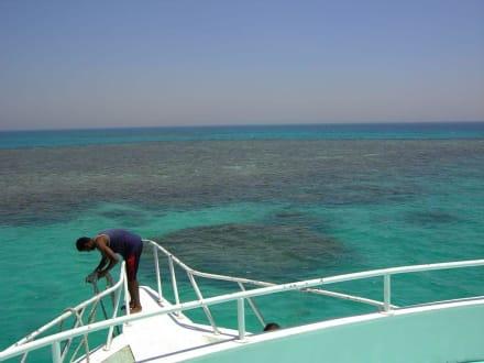 Korallenriff - Schnorcheln Hurghada