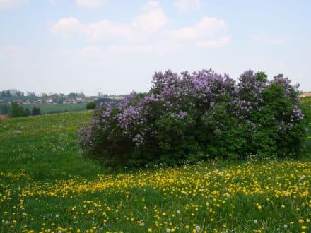 Frühling im Allgäu - Heinrichweg
