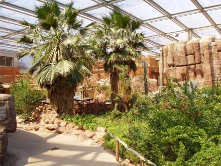 Wüste - Burgers' Zoo