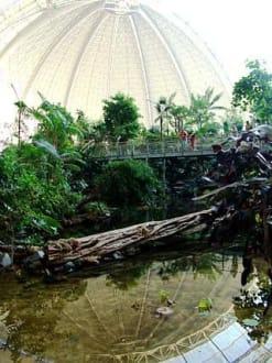 Regenwald-Brücke - Tropical Islands
