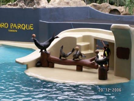 Die Seelöwen Show - Loro Parque