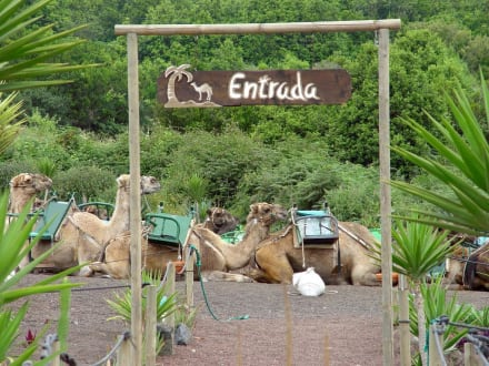 Kamel - Safari - Loro Parque