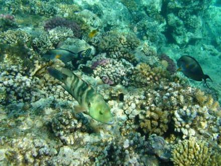 Unbeschreibliche Unterwasserwelt - Schnorcheln Makadi Bay