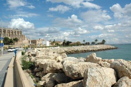 Am Hafen - Hafen Palma de Mallorca