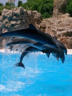 Loro Parque - Delphinshow - Loro Parque