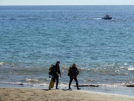 Beach/Coast/Harbor - Bahianus Club Diving Center