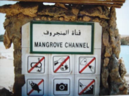 Mangrove Channel - Schnorcheln Ras Mohammed