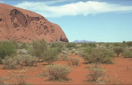Ayers Rock und Olgas - Ayers Rock / Uluru