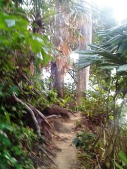 Urwald im Lamru Nationalpark - Lamru Nationalpark