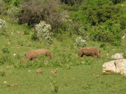 one of the big five - Masai Mara Safari