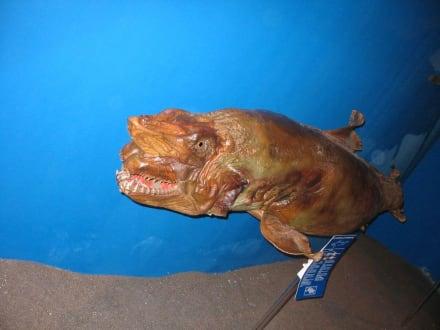 Mumifizierter Hai - Meerwasseraquarium
