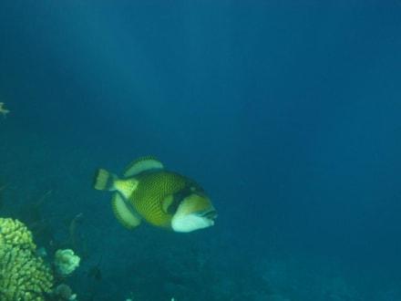 Unterwasserwelt am Hausriff Akassia Swiss Resort - Akassia Diving Center