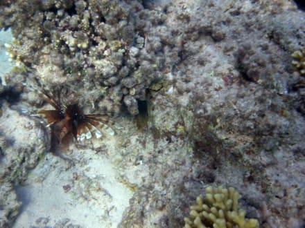Am Wrack am Hausriff Hotel Sea Life Resort - Tauchen Nabq Bay