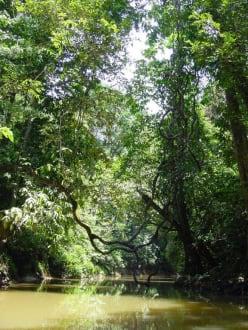 Flusslauf durch den Dschungel - Lake Chini