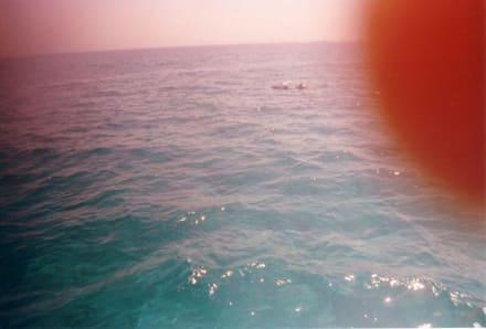 Wahnsinn - Delfin Tour Hurghada
