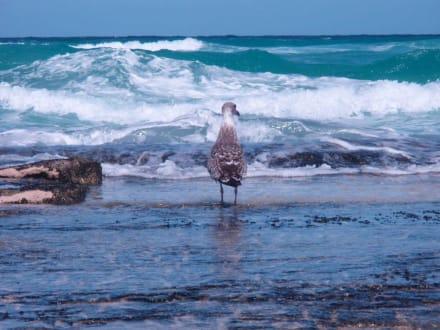 Faszination Wellenreiten - Strände Corralejo