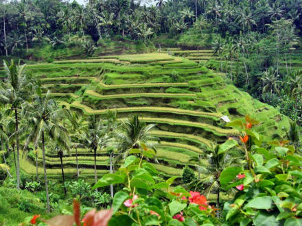Herrliche Reisterrassen - Reisterrassen