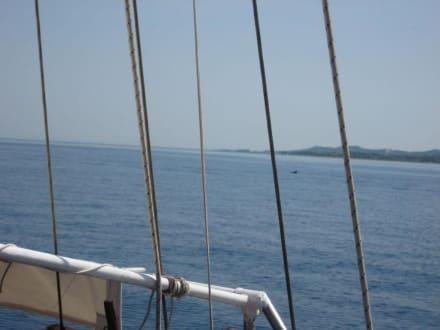 Delphine bei der Rückfahrt nach Korfu - Bootstour Costa's Moraitika