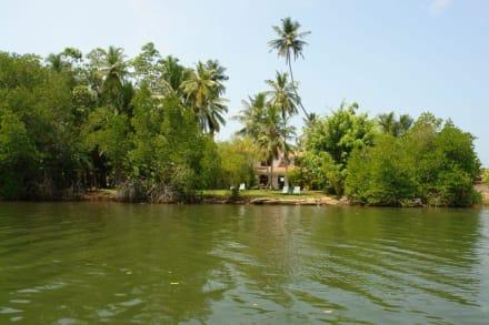 Fluss/See/Wasserfall - Bentota Fluss- und Mangroven Tour