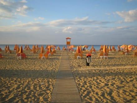 Adio - Tropical Beach