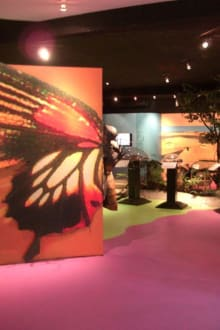 Der erste Bereich. - Phuket Butterfly Garden & Insect World