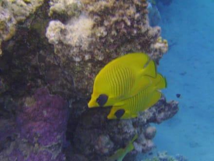 Schönes Riff - Tauchen Marsa Alam