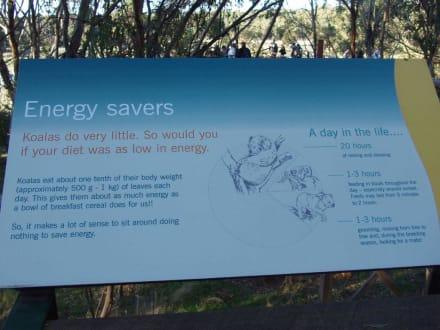 Eingang - Koala Conservation Centre