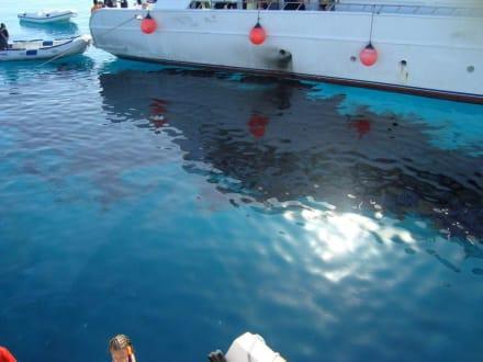 Umweltverschmutzung - Delfin Tour Hurghada