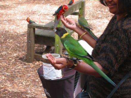 Fütterung der Papageien - Gloucester National Park