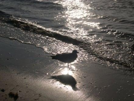 Strand mit Möwe am Abend - Strand Zandvoort