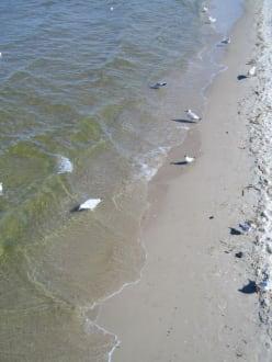 Strand von Ahlbeck - Strand Ahlbeck